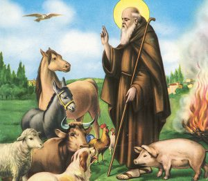 S. Antonio Abate (benedizione degli animali)